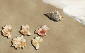 Seashells on beach with one apart from the others.